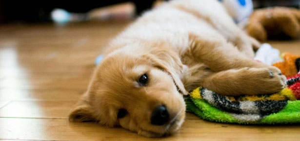 Pet Talk: Socializing Your Puppy