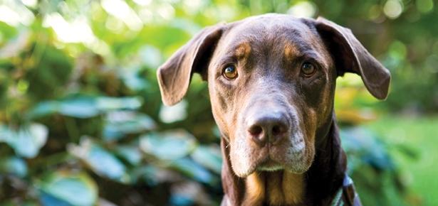 Pet Talk: Rabies Prevention