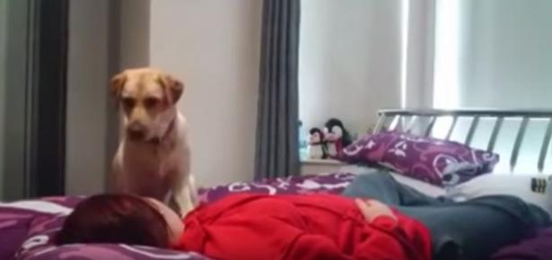 Dog Saves Her Human's Life During Seizure