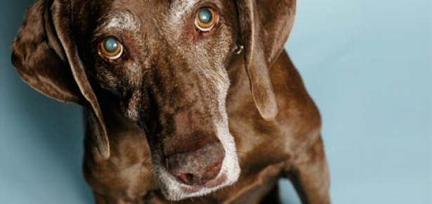seniordogs.jpg