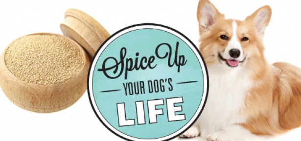 Spice up your dog's diet with these spices, including brewers yeast, seeds, tumeric, Vitamin C, spirulina, and apple cider