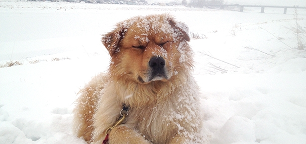 Preparing your Pet for Cold Weather