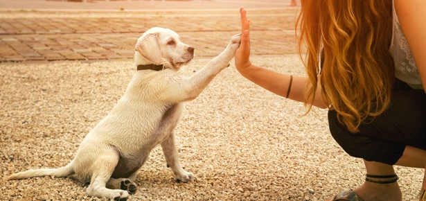 Obedience Training For Dogs Modern Dog Magazine