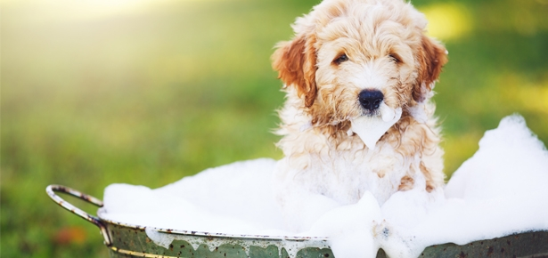 How often to bathe puppy