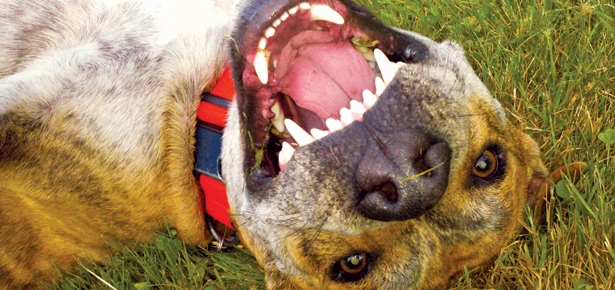 8 Reasons You Should Get Your Dog's Teeth Cleaned   Modern ...