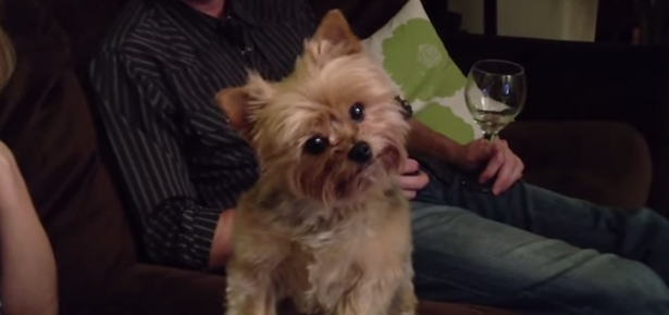 Cute Dog Turns Head for Thanksgiving