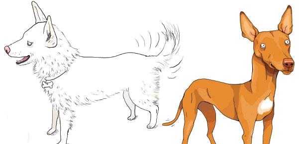 Why Dogs Have Tails