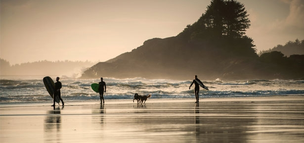 Dogs and Tofino, a super dog friendly place to surf and be in nature
