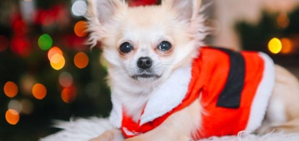 Holiday Dog Grooming
