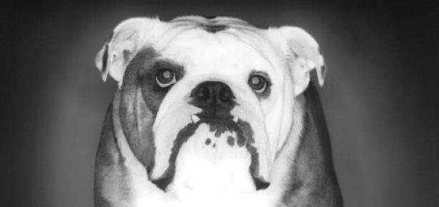 The Bulldog Modern Dog Magazine