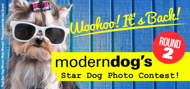 Star Dog Contest Rules And Regulations Modern Dog Magazine