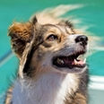 How to Bark in 18 Languages
