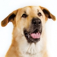 5 Dog Breeds You've Likely Never Heard Of