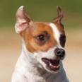 DogBodyLanguage-sm.jpg