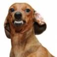 Evil_Dog-sm.jpg