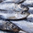 Fresh_Herring-fish-sm.jpg