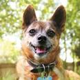 9 Ways to Help an Arthritic Dog