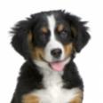 Secrets to Good Canine Health