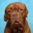 SeparationAnxiety-Dogs-sm2.jpg