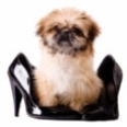 doginshoe-sm.jpg