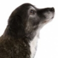 olddog-sm.jpg
