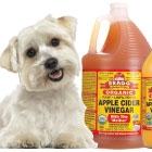 Apple Cider Vinegar Can Help Your Dog