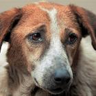 Pet Talk: Pet Cancer Awareness Month