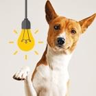 CanineIQ-Thumbnail
