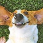 Dental-Thumbnail