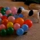 DogBalloon-sm.jpg