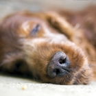 DogEuthanasia-Thumbnail