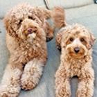 DogPhotos-Thumbnail