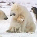 Dogs and Polar Bears