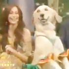 Dog dancing Merengue