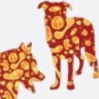 Dogbacteria-sm.jpg
