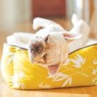 DoggyDecor-Thumbnail
