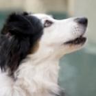 DogsThink-sm.jpg
