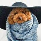 Dogs You Need to Follow on Instagram
