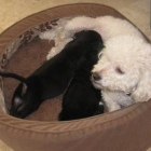 Dream and her Puppies