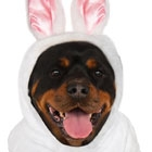 Easter-Dog-Teaser