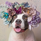FlowerPower-Thumbnail