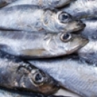 Cooked herring fish for dogs