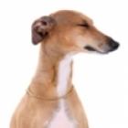 Greyhound-sm.jpg