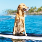 Hawaiian Dream Vacation—With Your Dog!