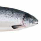HealthySnacksDogs-Fish-sm.jpg