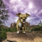 Joshua Oldridge photograph of dog in the desert