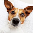 5 Indoor Activities to Cheer Up a Bored Dog