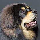 The 14 Largest Dog Breeds