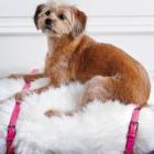 DIY Fuzzy Dog Bed