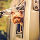 Dog Friendly RV Travel